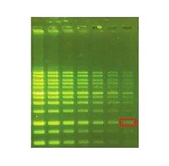3col_green_dna
